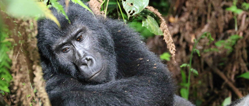 Conserving Nature in Uganda