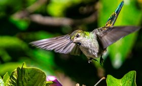 Bird Watching Tours Peru