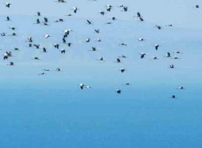 Bird Migration Flyways