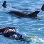 Dennis Buurman – Dolphin Encounter – Landing Page – Dolphin Swimming_56