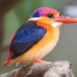 Enchanted-India-Kingfisher-Blue-Sky-Wildlife