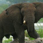 Livingstone African Safaris – Landing Page – African Elephants – Blue Sky Wildlife
