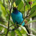 Cusco Birding Tour