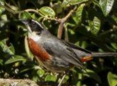 Birding & Adventure tour - Featured