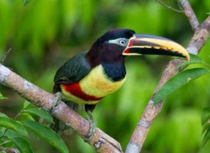 Posada Amazonas Birdwatching Tour - Featured
