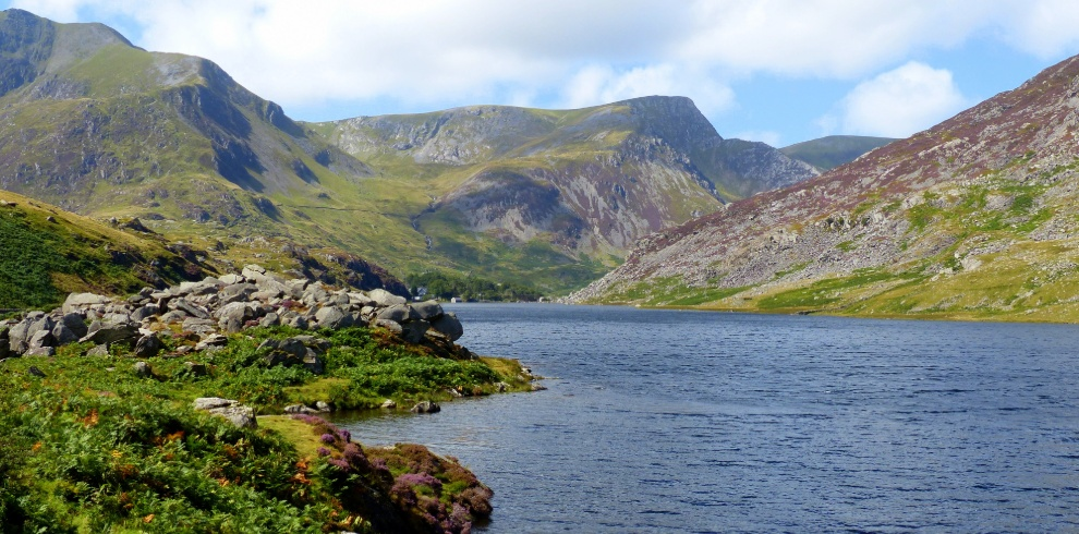 Birdwatching Trips, Ogwen Valley, Wales