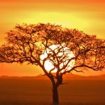 Sunrise in Serengeti (1MB)