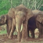 Tabin Wildlife – Tours – Tabin Wildlife Safari – Blue Sky Wildlife