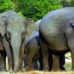 Walk With Jith – Wildlife – Asian Elephants – – Blue Sky Wildlife
