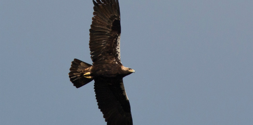 Wild Doñana – Sierra Morena Bird Trip – Spanish Imperial Eagle – Blue Sky Wildlife