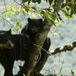 inkanatura-travel-spectacled-bear