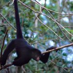 inkanatura-travel-spider-monkey