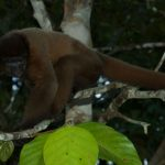 inkanatura-travel-woolly-monkey