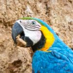 Parrot & Macaw Lovers Programme