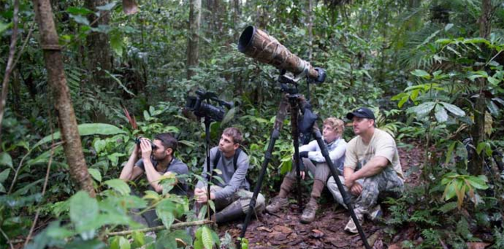 Rainforest Wildlife Photography Tour