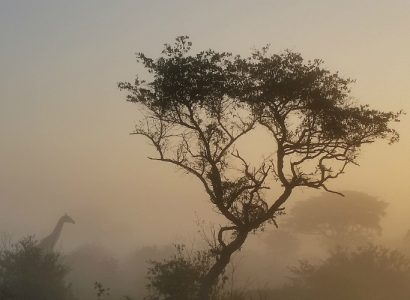 Wildlife of Eastern South Africa: Kruger to Coast