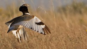 Birds of Extremadura and Orchids Tour, Spain