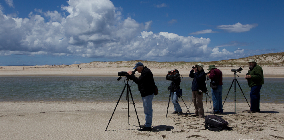 wrybill-birding-tours_out-birding2_blue-sky-wildlife – 990 x 490