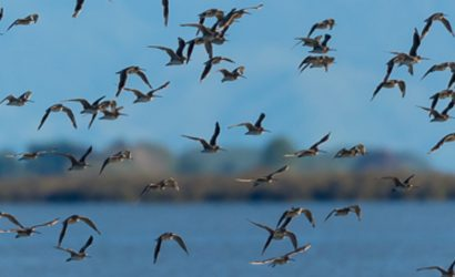 Return of the Swallows: A Travelers Companion for the Migratory Soul