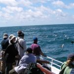 Pelagic trip on the Atlantic Ocean