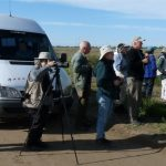 Birding the Pampas of Argentina