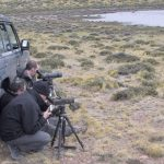 Looking for Hooded Grebes in Patagonia