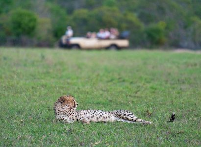 Kruger Safari Tours