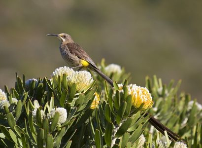 Bird Watching South Africa