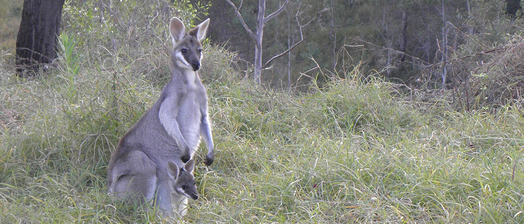 Australian Family Wildlife Holiday