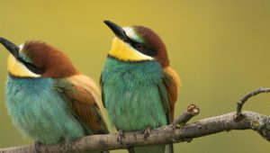 Nature Photo Tours Bee-eaters