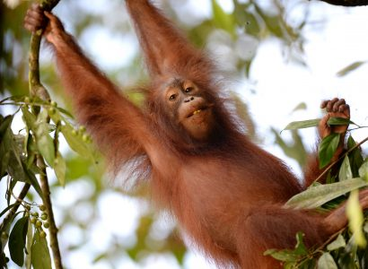Borneo Nature Tours