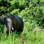 Borneo Nature Tours – Christina Lam – Elephant – Blue Sky Wildlife