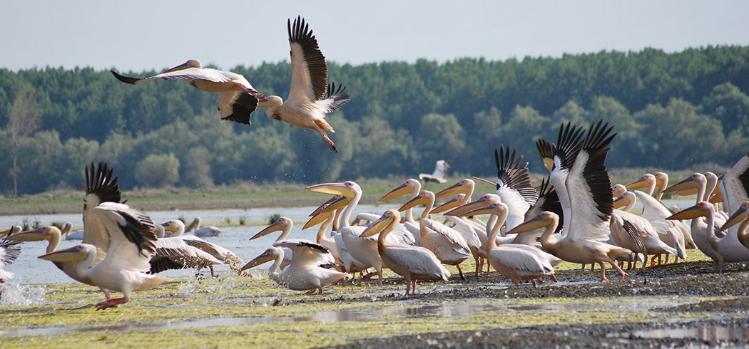 Birding Hotspot in the Danube Delta