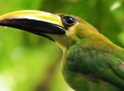 Feathers Eco-Birding Tours