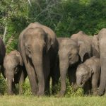 An Elephant herd form Bandipur Tiger Reserve.