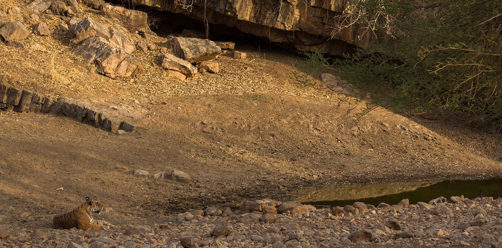 A typical tiger scape from Ranthambore.