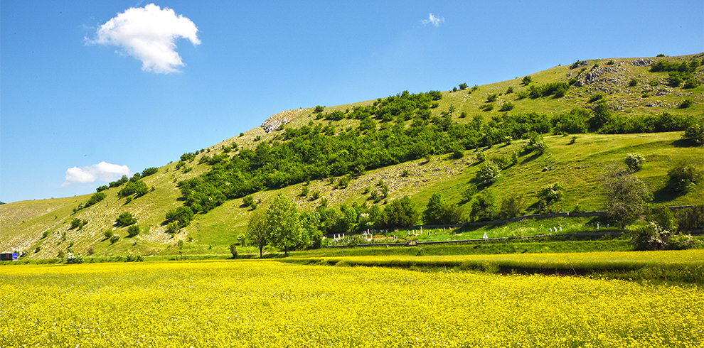Floral display in Dinaric Alps