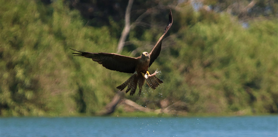 Ebro Delta Bird Watching Trip in Spain