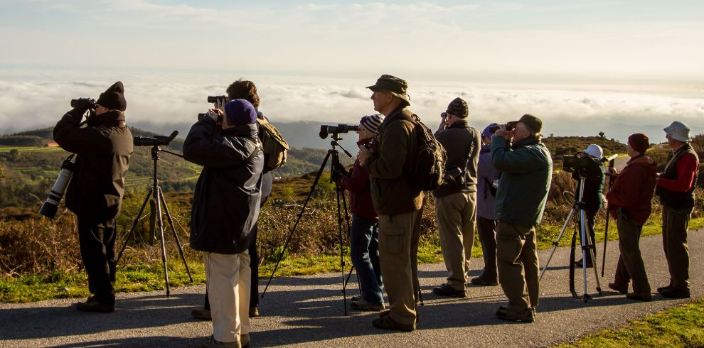 Portuguese Migration Birdwatching Tour