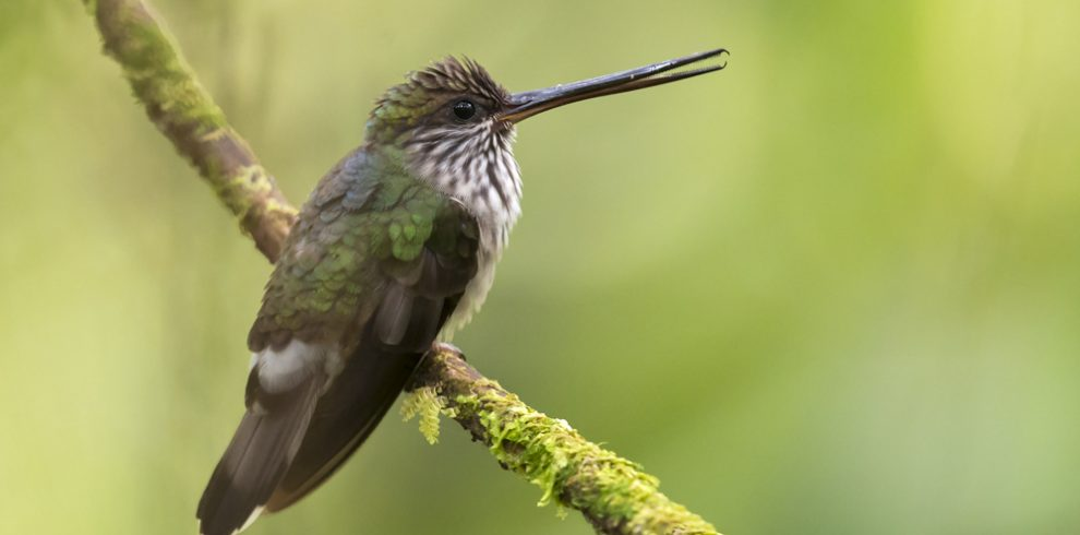 Birding Colombia, Colombia Birdwatch