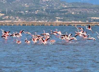 Bird watching tours, Ebro Delta, Spain