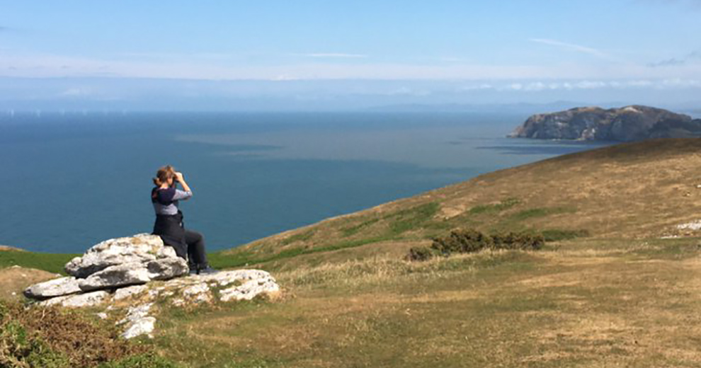 Birdwatching on Great Orme