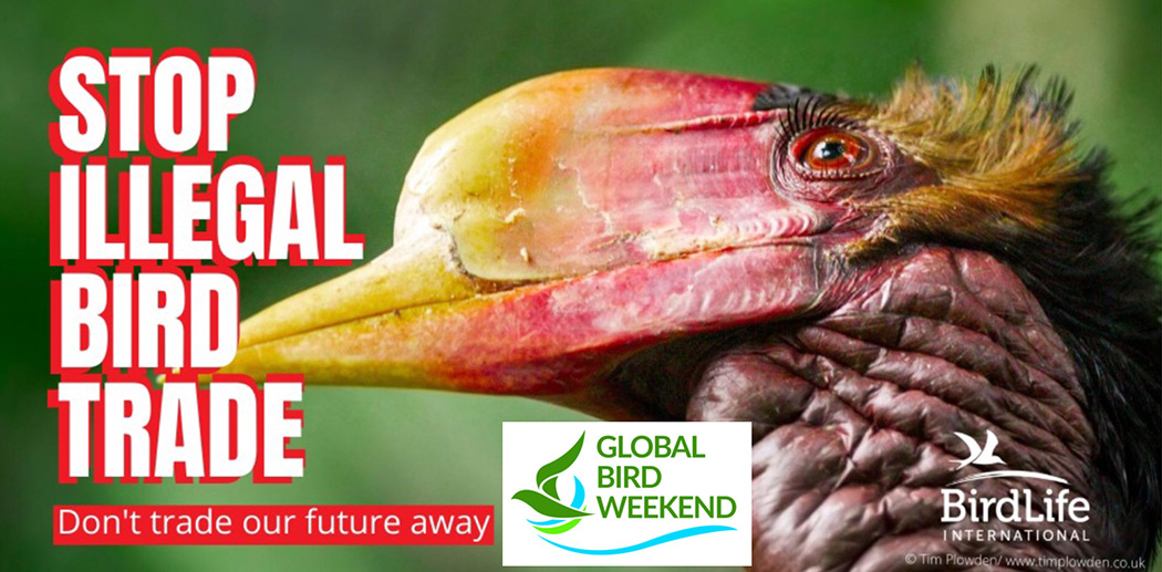 stop illegal bird trade conservation project