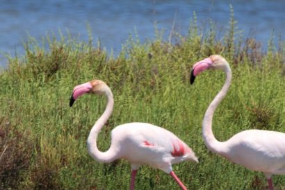 Wildlife Holidays in Europe seeing flamingos
