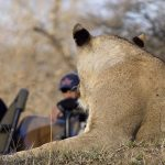 Game viewing, Sabi Sands