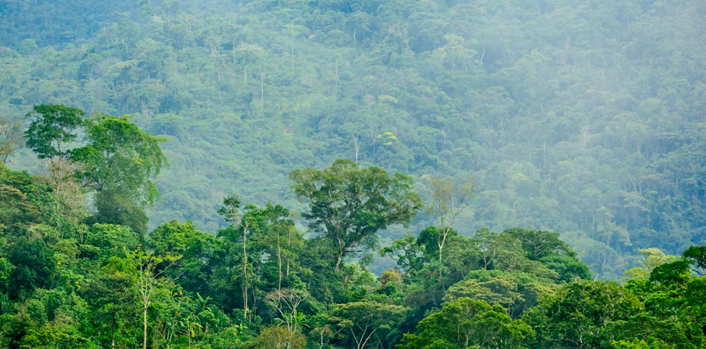 Manu road forest – Green-Tours-Peru