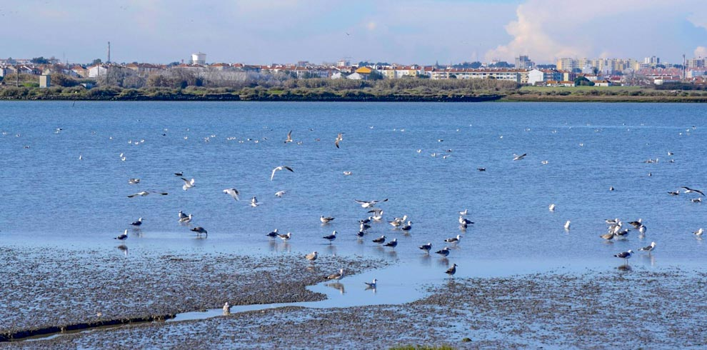 Seo-EO – Gulls-and-Terns-Birdwatching-by-boat