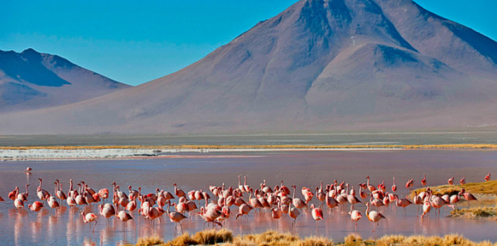 Andean-Flamingos-Bolivia-Naturally