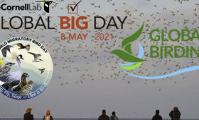 Global Big Day official poster