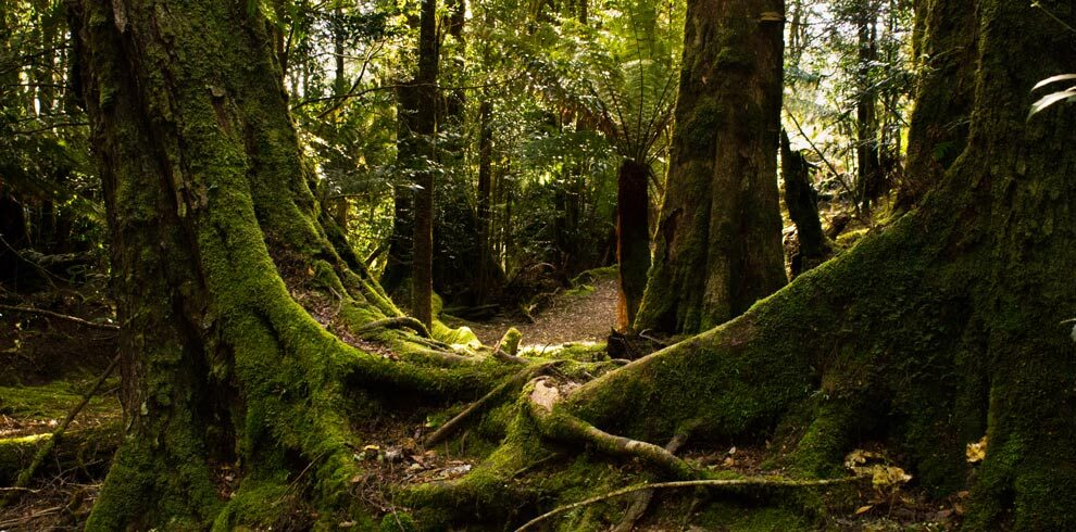 Mt Victoria Forest Reserve